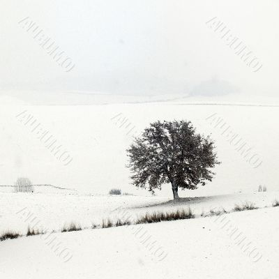 Winter in Valdarbia