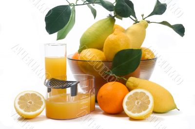 machine for pressing citrus