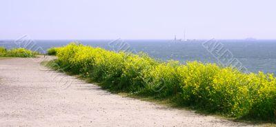 Panorama View Of Finland Gulf