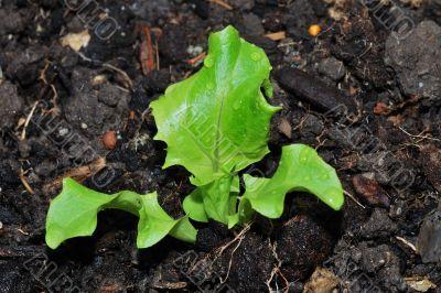fresh green salad vitamin