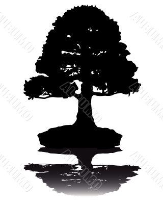 Japanese bonsai  tree  silhouette