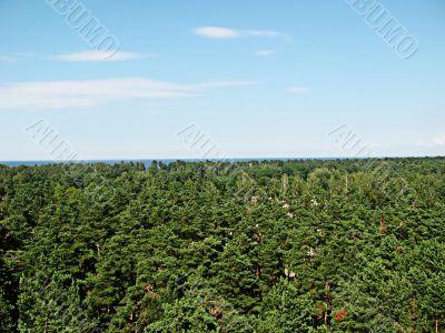 Forest of Latvia near the Baltic sea