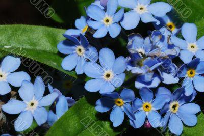 nice blue bloom
