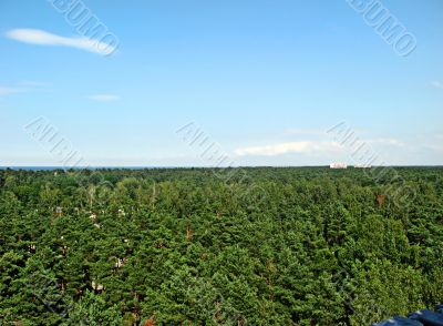Forest of Latvia