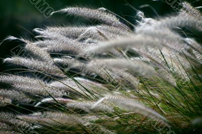 Windy plants