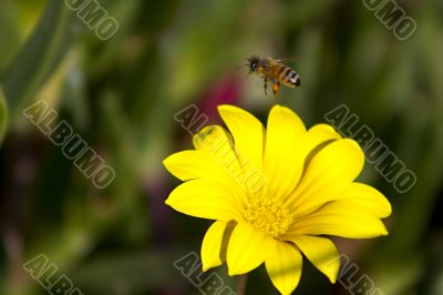 Bee leaving a flower