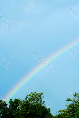 Rainbow with blue skies and trees