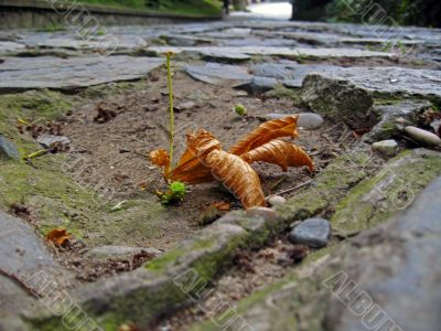 Brown fallen leaf on the ground