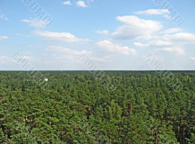 Forest of Latvia from the air