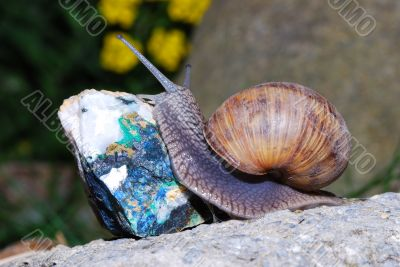 snail crawling on minerals