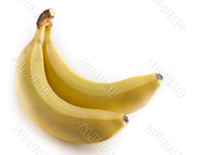 Two bananas on white background.