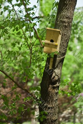 wooden birds house on a tree