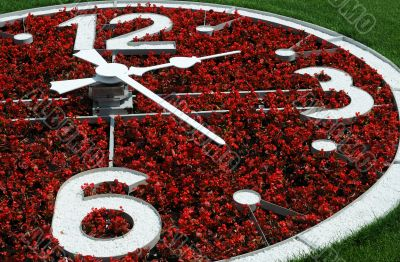 Part of Flower Clock