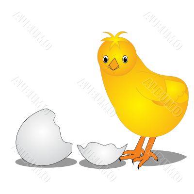 The Chicken near by split egg
