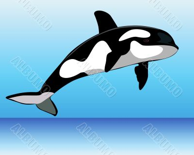 Killer Whale over the water