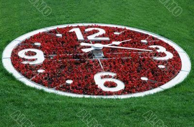 Flower Clock Against Lawn Background