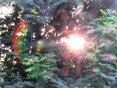 Sun Through Tree Leaves