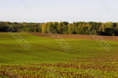 Winter crop field