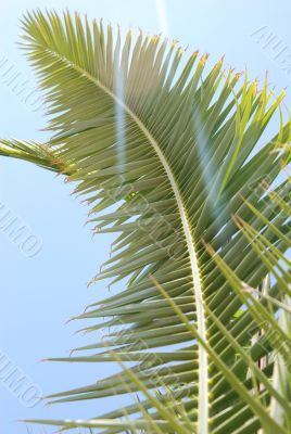 Palm leaf in patch of sunlight