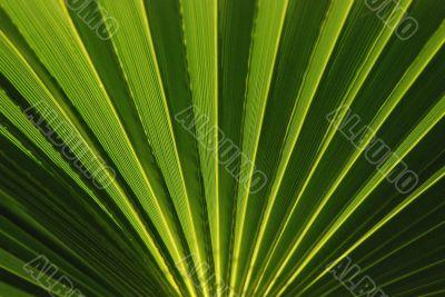 Palm leaf, round