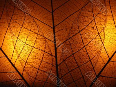 Lighting leaf bone