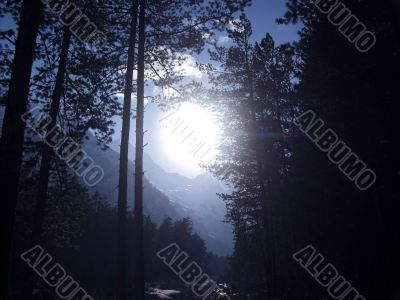 Big white sun shining through the forest