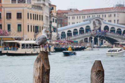 Bird at the Grand Canal