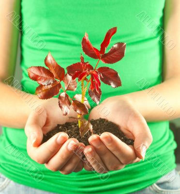 Woman holding seedling grown from soil in her hands