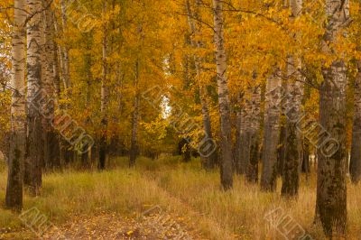 Autumn valley in central Russia_Horizontal