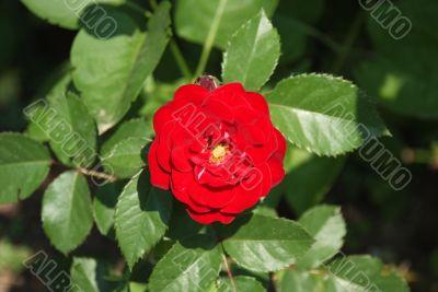 red flower in soft focus