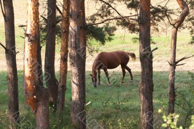 The horse in the pasture