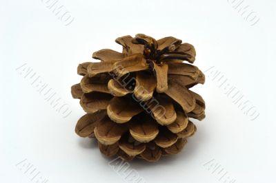 The Crimean pine con