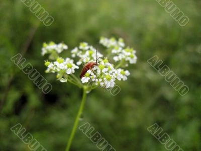 Red insect on the flower