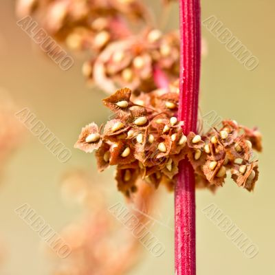 red stem with yellow seeds