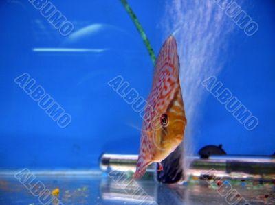 Tropical exotic fish