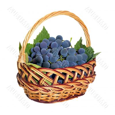 wicker basket with brushes of dark grapes