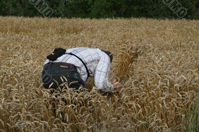 Farmer before harvesting