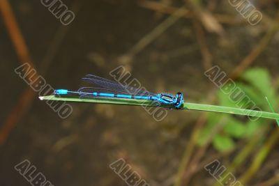 dragonfly sits on leaf