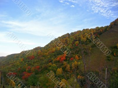 Golden autumn, blue sky and caucasus mountains