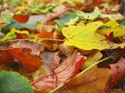 Yellow red and green fallen leaves on the ground