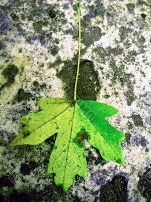 Green fallen leaf on the dark ground