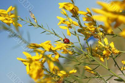 Organic flower texture