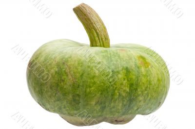 Green pumpkin isolated on white background.