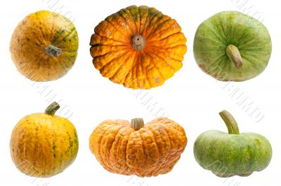 Colourful pumpkins isolated on white background.