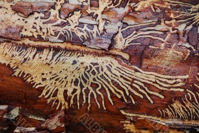 wood_worm_pattern