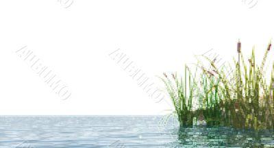 pixel reed