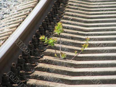 The seedlind on the railway