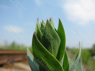 The green seedling