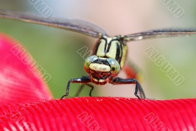 dragonfly sitting on a red plastic