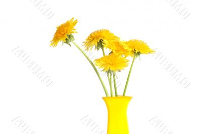 Dandelions In Vase